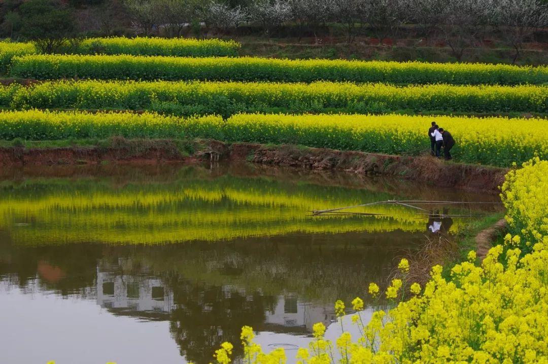 湖南安仁居然隐匿了这么多美景 正是落英缤纷好时节!