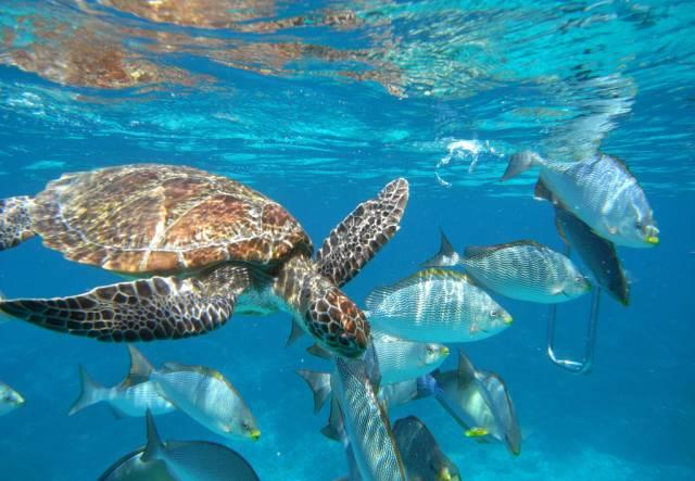 壁纸 海底 海底世界 海洋馆 水族馆 桌面 640_443