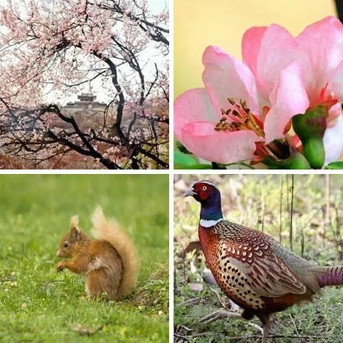 春光灿烂的日子到巩义邂逅一段诗情画意