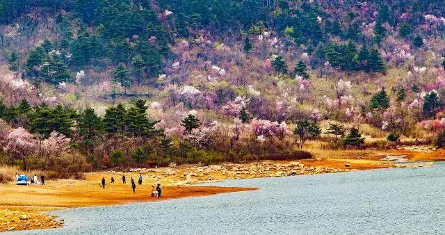 这座惊艳花海小城 把北海道的网红芝樱花海搬到了浙江!