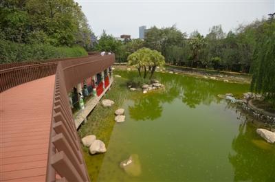新华公园归来 植物更多湖更大收费项目不见了_更大|新华