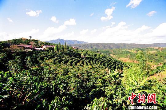 云南将在全国布局10万台自助咖啡机:一杯咖啡补2元给贫困咖农