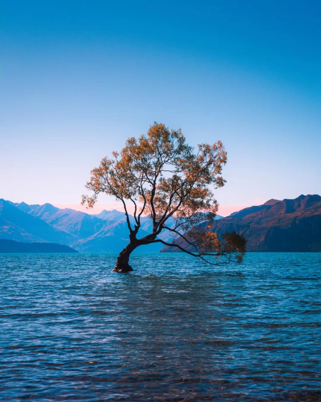 一个历史问题 新西兰的主要成分是什么