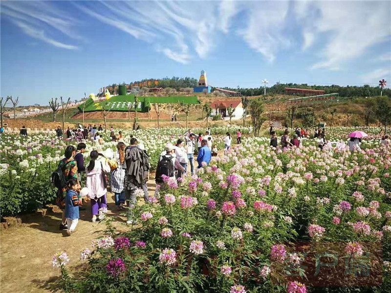 全域旅游见成效 国庆河南旅游市