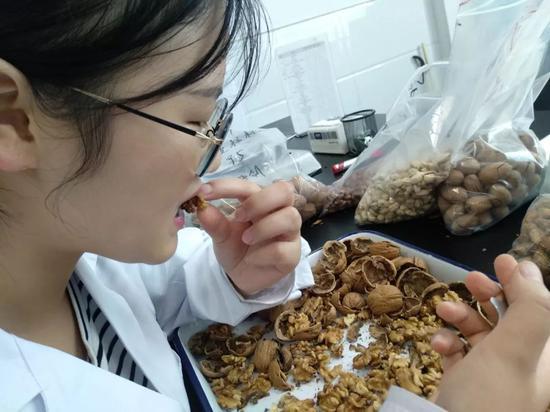 燕子正在实验室里试吃有哈喇子味的手剥核桃。新京报记者吴靖摄
