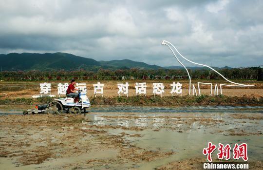 当日试验种植的稻田分水田和旱田。 王晓斌摄