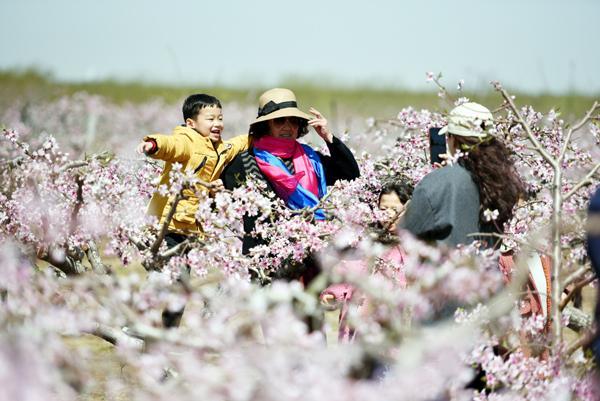 """近日,游客在郯城县马头镇桑庄村的""""农家花园""""里赏花游玩。"""