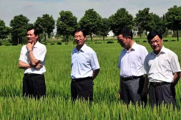 曹卫星(左二)任江苏省副省长时考察苏州市水稻技术