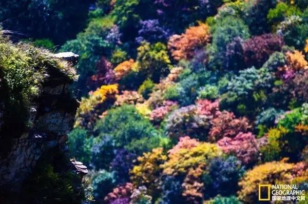 【山的色彩】树是大山的主要家庭成员,树的斑斓色彩让大山变得不那么