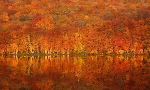 日本小众赏红叶的好去处 还方便刷三年签11