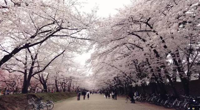 日本小众赏红叶的好去处 还方便刷三年签1