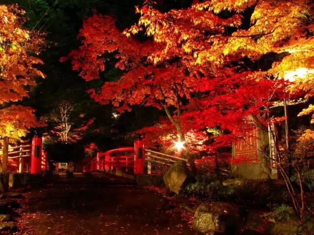 日本小众赏红叶的好去处 还方便刷三年签14