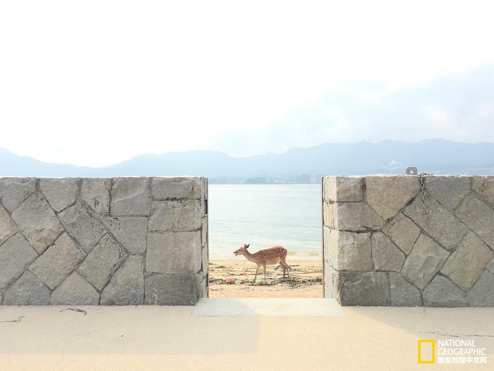 濑户内海:寺庙,烟囱和艺术