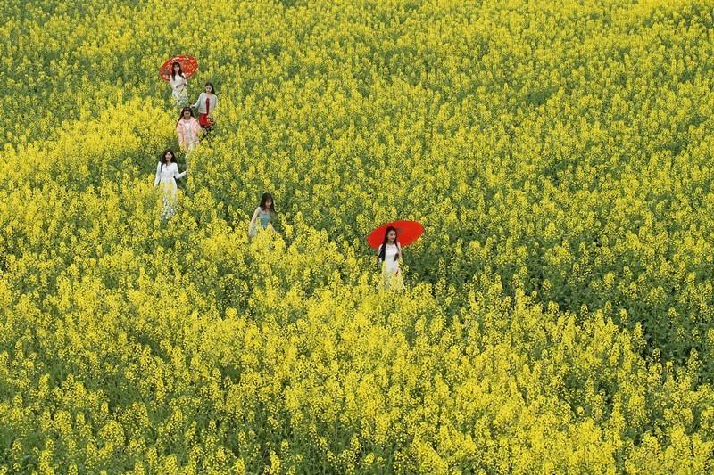 开往中国最脱俗春天 四川这条小环线一夜间花开成海