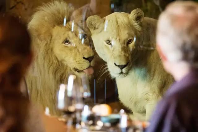 贾马拉野生动物旅馆