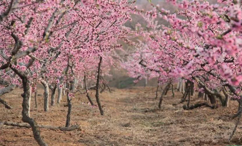 别惦记韩国了 祖国最好的风景全在这里