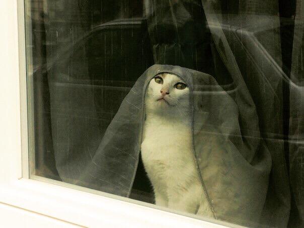 囧图160721:雨天别让泰迪出去,很可怕的|41图