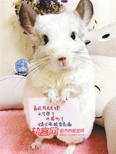 可爱动物举牌照片
