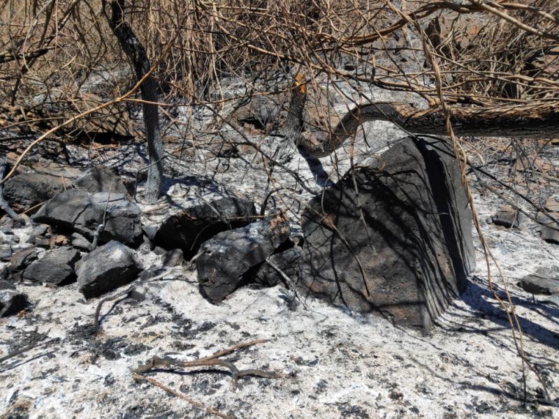 北京山火6名涉案者被抓 有村民称数百棵果树被烧