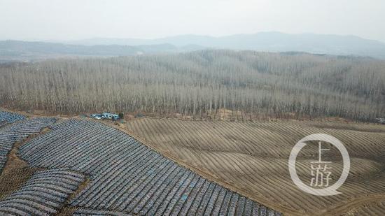 黑龙江6000亩林地疑被毁林种人参 官方:已派调查组
