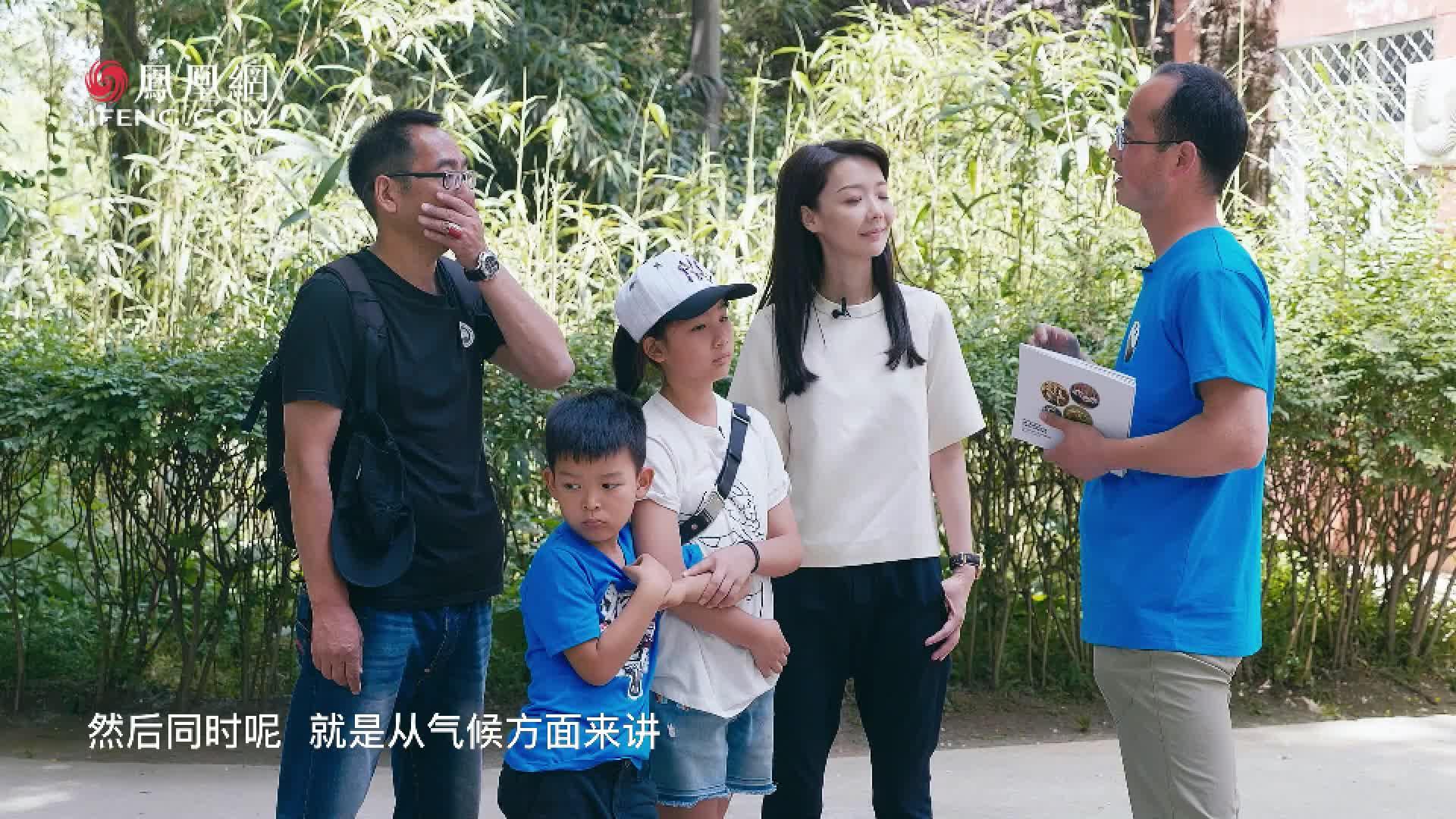 《中国宝贝计划》走近秦岭亚种大熊猫:更古老的新亚种种群