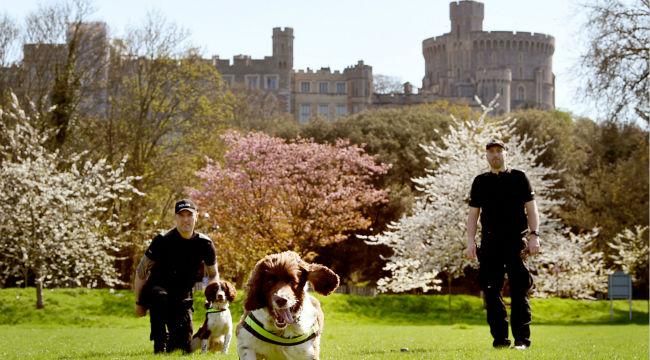 哈里王子婚礼场地提前揭秘 温莎城堡保安警犬严阵以待