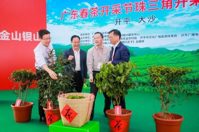 春茶開采啦!這里是珠三角規模最大的茶產業基地