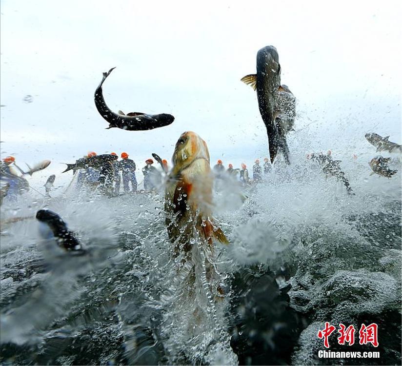 """巨网捕鱼万鱼跃起 """"万鱼腾飞""""场面异常壮观 网络热点 第6张"""
